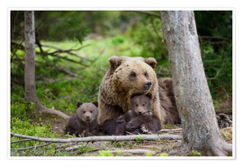 Poster Premium  Brown bear with cubs in forest