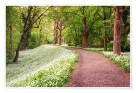 Poster Premium Forest path in spring