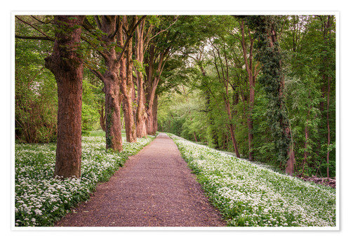 Poster Premium Forest path through wild garlic meadow