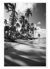Poster  Tropical palm trees on a Brazilian beach in black and white - Alex Saberi
