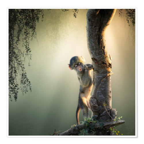 Poster Premium Baby baboon in tree