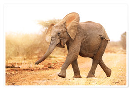 Poster Premium Happy elephant, South Africa