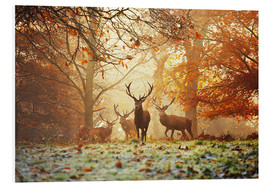 Stampa su schiuma dura  Stags and deer in an autumn forest with mist - Alex Saberi