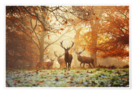 Poster  Stags and deer in an autumn forest with mist - Alex Saberi
