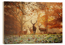 Legno  Stags and deer in an autumn forest with mist - Alex Saberi