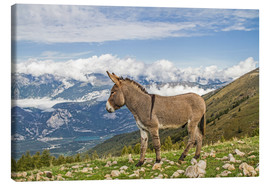 Stampa su tela  Donkeys on a lonely mountain meadow