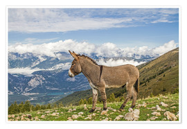 Poster Premium  Donkeys on a lonely mountain meadow