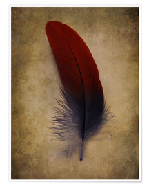 Poster Blue and red feather
