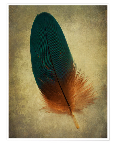 Poster Premium Green and orange feather