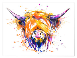 Poster Premium  Scottish Highland Cow - Zaira Dzhaubaeva