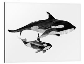 Alluminio Dibond  A Swim together (black and white) - Goed Blauw