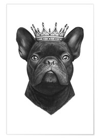 Poster  King French bulldog - Valeriya Korenkova