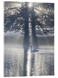 Stampa su vetro acrilico  Swan on misty lake - Alex Saberi