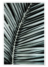 Poster Premium French Palms 3