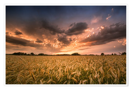 Poster Premium Grain field | After the storm