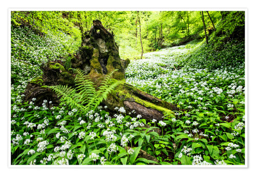 Poster Premium Fairy Forest with wild garlic