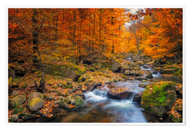 Poster Premium Golden autumn in nationalpark harz