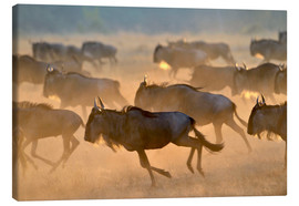 Stampa su tela  Wildebeests during the great migration, Serengeti - age fotostock