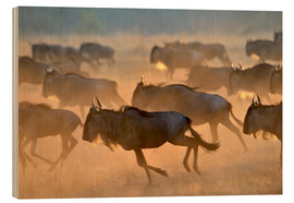 Stampa su legno  Wildebeests during the great migration, Serengeti - age fotostock