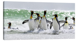 Stampa su tela  King Penguin (Aptenodytes patagonicus) on the Falkand Islands in the South Atlantic. Group of pengui - Cubo Images