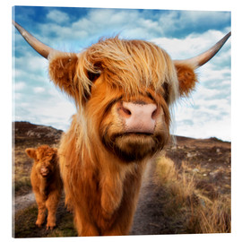 Stampa su vetro acrilico  Highland cattle with calf - Westend61