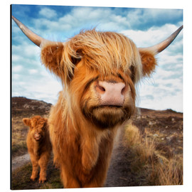 Alluminio Dibond  Highland cattle with calf - Westend61