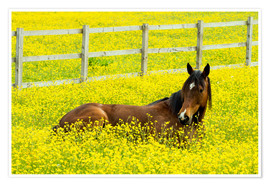 Poster Premium Horse in the rape field