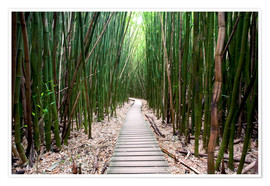 Poster Premium  Trail through the bamboo forest - Pacific Stock