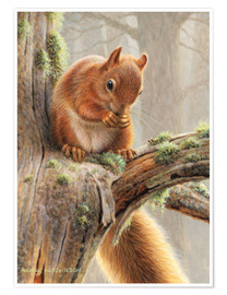 Poster Premium  Red squirrel sitting on tree in forest