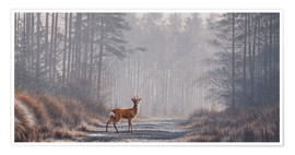 Poster Premium Roe deer in forest