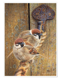 Poster Premium Two sparrows perching on rope by wooden door