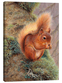 Tela  Squirrel with nut - Ikon Images