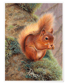 Poster Premium Squirrel with nut