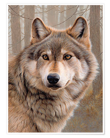 Poster Premium  North-american wolf portrait - Ikon Images