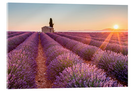 Stampa su vetro acrilico  Valensole Plateau, Provence, France. Sunrise in a lavender field in bloom with lonely rural house an - age fotostock