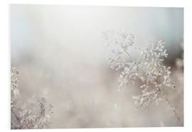 Forex  Close up of backlit frost ice crystals on wavy hair-grass (deschampsia flexuosa) - Cultura/Seb Oliver