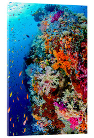 Vetro acrilico  Fish and coral reef in Indonesia - Jones & Shimlock