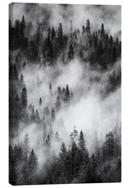 Tela  Black and white pine forests - Judith Zimmerman
