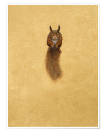 Poster Premium  Leaping Red Squirrel - - Tim Hayward