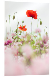 Stampa su vetro acrilico  Poppies in the field - Bob Daalder