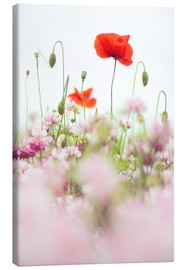 Stampa su tela  Poppies in the field - Bob Daalder