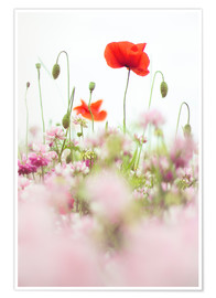 Poster Premium  Poppies in the field - Bob Daalder