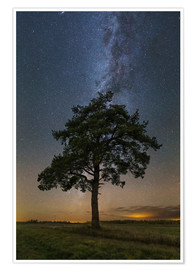 Poster Premium Lonely tree in a field at night under the Milky Way in Vyazma, Russia.