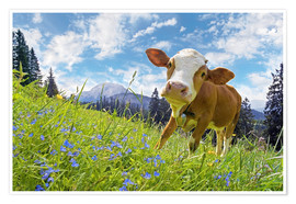 Poster Premium Young cattle Muhh