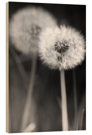 Stampa su legno  Dandelions black and white - Julia Delgado