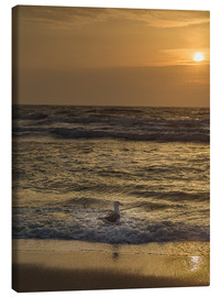 Stampa su tela  Seagull in the sunset - Heiko Mundel