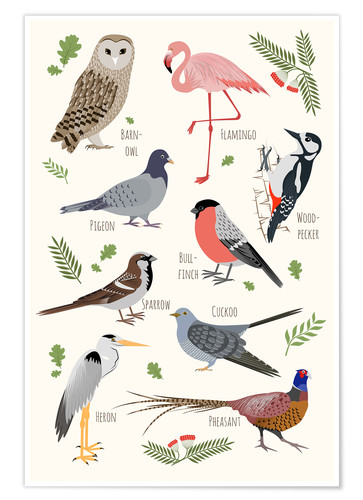Poster Specie di uccelli - inglese