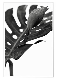 Poster  Monstera nera 02 - Art Couture